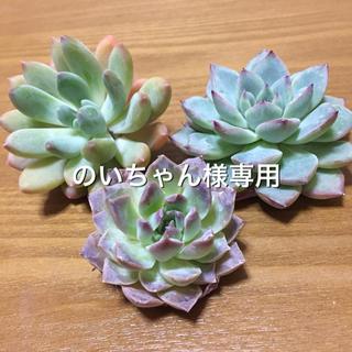 のいちゃん様専用(その他)