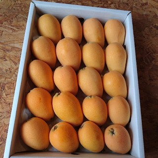 早稲ビワ 路地もの 長崎産 1級品 2L~Lサイズ(フルーツ)