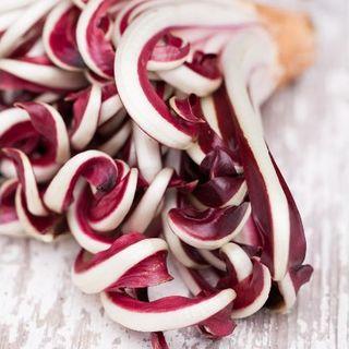 チコリー種子 トレヴィーゾ2 50粒(野菜)