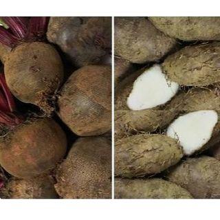『ビーツ(大)』&『クーガ芋(小)』 合計 1.5 キロセット 送料込(野菜)
