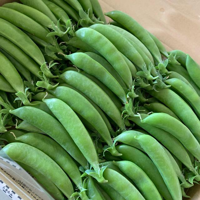 スナップエンドウ  1kg 食品/飲料/酒の食品(野菜)の商品写真