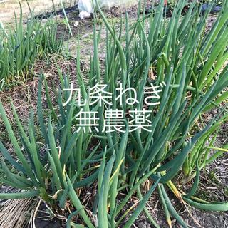 九条ねぎ   根つき苗  15本380円    30本700円(野菜)