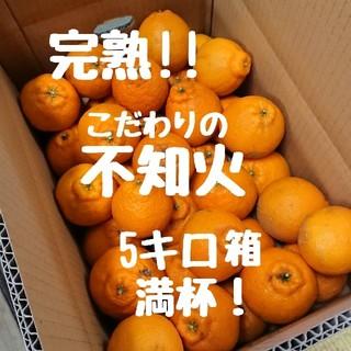完熟!!不知火(デコポン)5キロ箱満杯 ご家庭用(フルーツ)