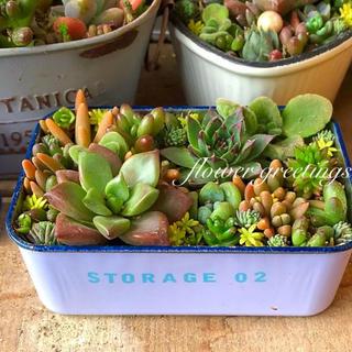 多肉植物 寄せ植え もりもり ブリキ缶 #strage02(その他)