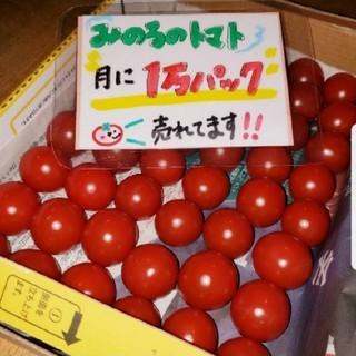 静岡県産 みのるのミニトマト