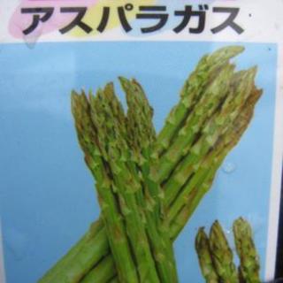 アスパラガス8株(野菜)