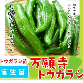 万願寺とうがらし4株とアスパラガス4株(野菜)