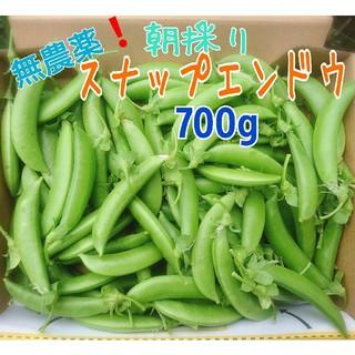 無農薬栽培 スナップエンドウ700g 長崎県 五島列島より♪