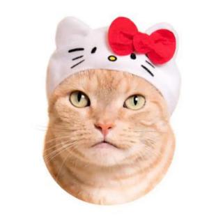 ハローキティ(ハローキティ)のガチャポンねこのかぶりもの12 サンリオキャラクターズ キティちゃん(猫)