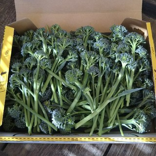 ブロッコリー わき芽 無農薬(野菜)