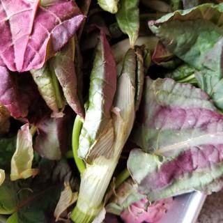 秋田県産☆さし400グラム(野菜)