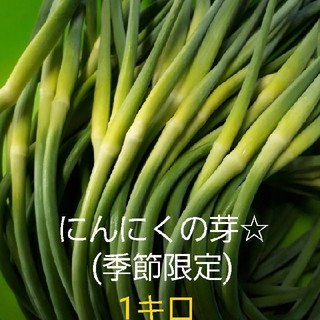 にんにくの芽1キロ(農家直送)