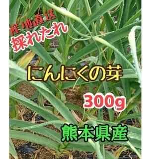 産地直送 にんにくの芽300g 熊本県