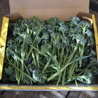 ブロッコリー わき芽 無農薬 (野菜)