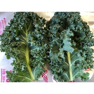 500g スーパーフード サラダケール カーリー カリーノケール 朝採り健康野菜(野菜)