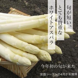 大特価‼︎ 北海道産ホワイトアスパラガス Lサイズ5束(野菜)