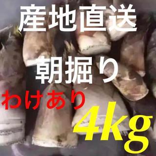 朝掘り!新鮮! たけのこ 4kg ワケあり品!なくても発送!(野菜)