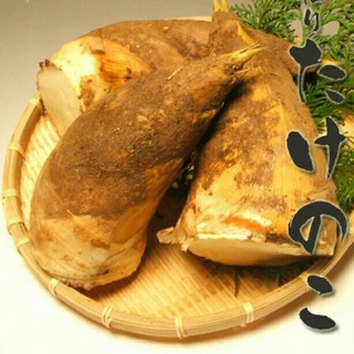 筍4,0kg 三重県産 週末限定今期最終出品(野菜)