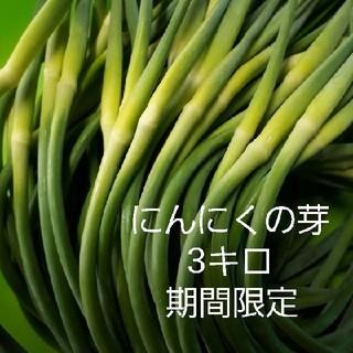 にんにくの芽3キロ♡(野菜)