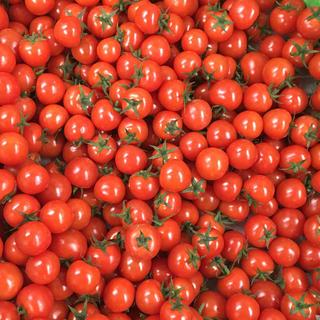 【熊本産】フルーツミニトマト1キロ(野菜)