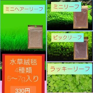 水草 アクアリウム カーペットプランツ 各種 5~7g入り