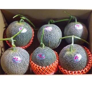 送料無料 肥後グリーンメロン6玉入り家庭用(フルーツ)