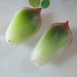 アイス様専用♥フロリディティ2枚葉挿し他♥多肉植物(その他)