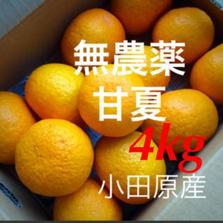 小田原産  無農薬  甘夏  4kg   産地直送   送料込み(フルーツ)