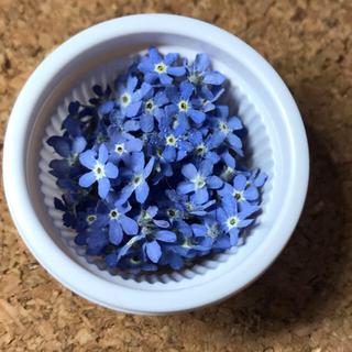 わすれな草【ブルー】 花材ドライフラワー(ドライフラワー)