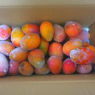 沖縄県産・冷凍マンゴー10kg【送料無料!】(フルーツ)