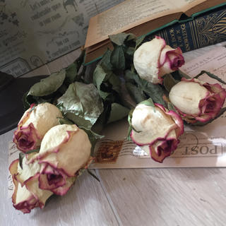 sold outドライフラワーピンク縁取りのクリーム色のバラ(ドライフラワー)