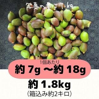 [赤:2]約1.8キロ グリーンマンゴー 青マンゴー 摘果マンゴー(フルーツ)