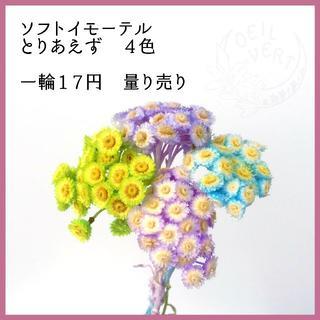 【1輪17円】ソフトイモーテル 量り売り(ドライフラワー)