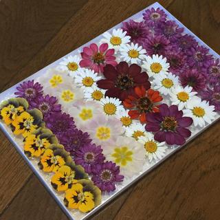 100円のお値引き‼️お花屋さんが作った季節のドライフラワー   Ra-12(ドライフラワー)
