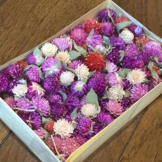 お花屋さんが作った季節のドライフラワー   Ra-14(ドライフラワー)