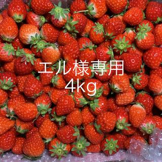 本日発送!地域限定!クール便●小粒苺2kg●いちごイチゴ(フルーツ)