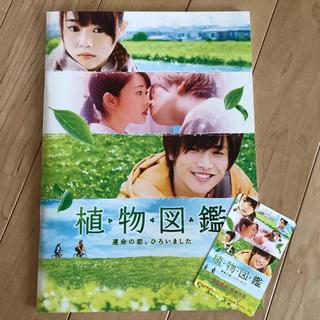 サンダイメジェイソウルブラザーズ(三代目 J Soul Brothers)の植物図鑑 パンフレット(日本映画)