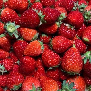 地域限定!クール便●小粒苺●いちごさん2kg●いちごイチゴ(フルーツ)