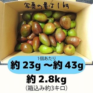 [青3]約2.8キロ グリーンマンゴー 青マンゴー 加工用(フルーツ)
