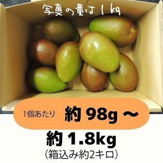[橙2]約1.8キロ グリーンマンゴー 青マンゴー 摘果マンゴー 加工用(フルーツ)