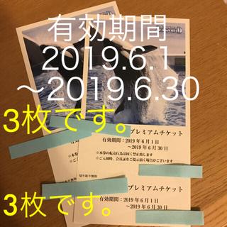 【3枚!】鴨川シーワールド 入園チケット 三枚セット