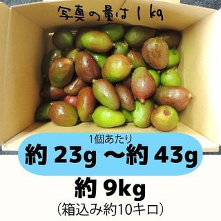 青9キロ、黄9キロの計18キロ グリーンマンゴー(フルーツ)
