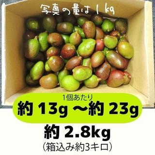 [緑:3-1]約2.8キロ グリーンマンゴー 青マンゴー 摘果マンゴー(フルーツ)