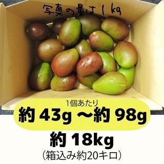 [黄20]約18キロ グリーンマンゴー 青マンゴー 摘果マンゴー 加工用(フルーツ)
