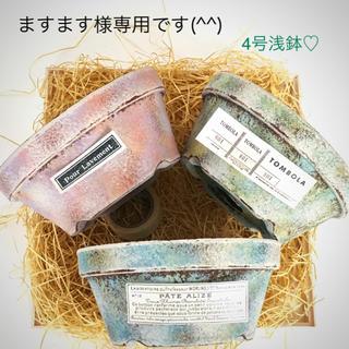 多肉植物リメイク缶鉢寄せ植えにどうぞ(^^)ますます様専用です(^^)(その他)