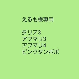 えるも様専用【ダリア②】濃紫白映え 長咲き!種子5粒(その他)