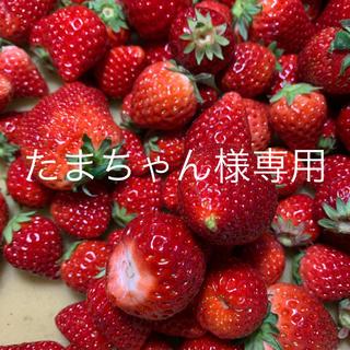 たまちゃん様専用●いちごさん2kg●クール便込み(フルーツ)