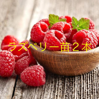 MEY様専用 ラズベリー抜き苗 2本(プレゼントつき)(その他)