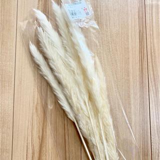 大地農園 テールリード 新品 1袋(ドライフラワー)