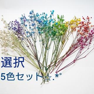 ★ドライフラワー かすみ草 5色オーダー★(ドライフラワー)
